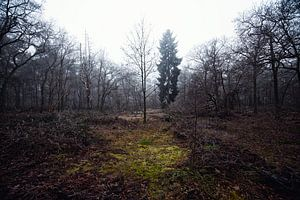 Hollands winter landschap  van Maik Keizer