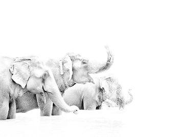 Olifanten in Nepal von Jeroen Kleverwal