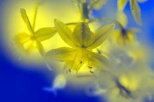 Illumination florale