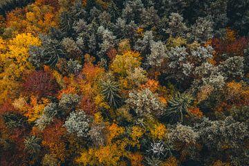 Luftaufnahme bunter Wald mit Bäumen von Thilo Wagner