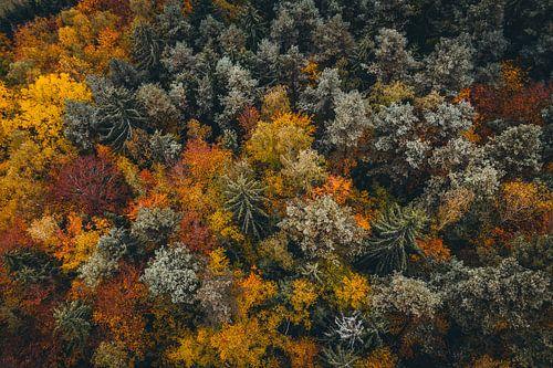 Luftaufnahme bunter Wald mit Bäumen