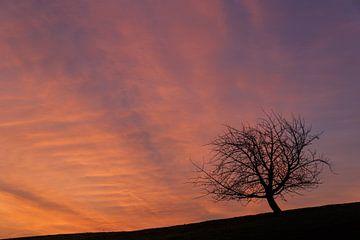 ciel du matin sur Ronny Rohloff