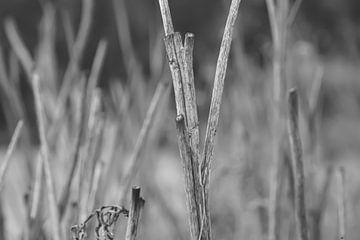 Schwarze und weiße Zweige von Niek Traas