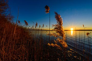 Schilfgras im Sonnenuntergang, Ammersee, Bayern, Deutschland * Reed at sunset, lake Ammersee, Bavari von Denis Feiner