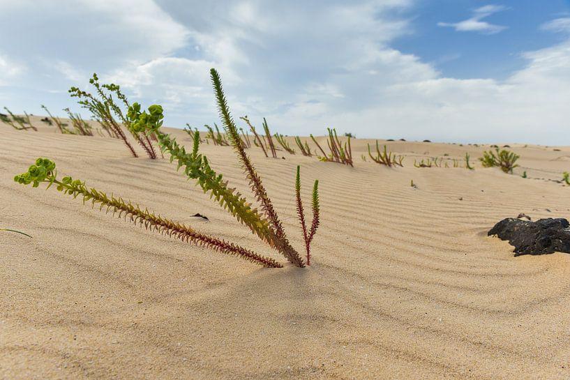 Growing in the sand von Arjan Penning