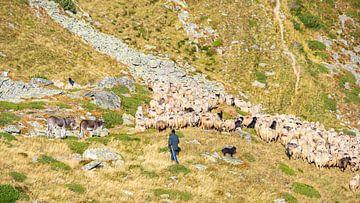 Schaapsherder met kudde en honden in bergen van Roemenië van Jessica Lokker