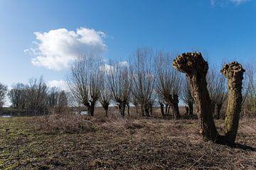 Knotwilgen in Nederlands winterlandschap von Cilia Brandts