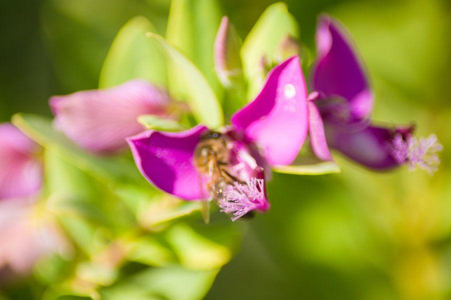 Bloem paars met groen van Stefanie de Boer