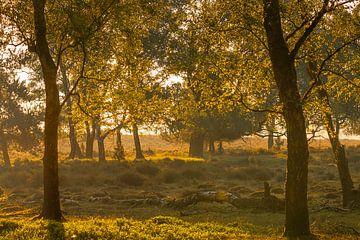 Sonnenaufgang im Wald von Diane van Veen