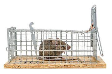De kleine muis zit gevangen in een val van draad tegen vage achtergrond die op wit wordt geïsoleerdr van Hans-Jürgen Janda