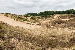 Dune du Peroquet van Werner Lerooy