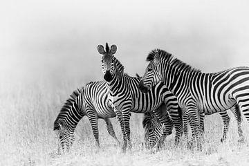 Zebras in Schwarz und Weiß von YvePhotography