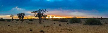 Panorama met kokerbomen bij zonsopkomst  in de Kalahari woestijn, Namibië van Rietje Bulthuis