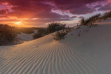 Coucher de soleil dans les dunes du Westduinpark près de Kijkduin à La Haye sur Rob Kints