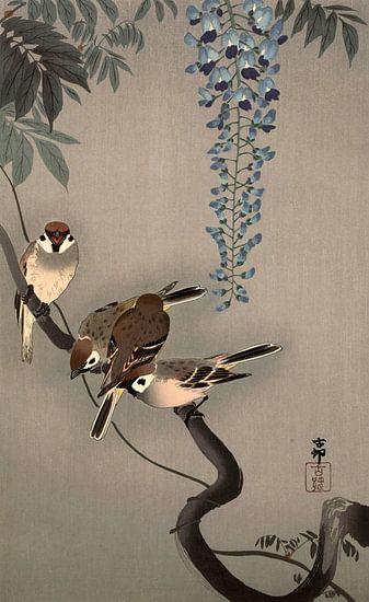 Ringmussen bij wisteria, Ohara Koson