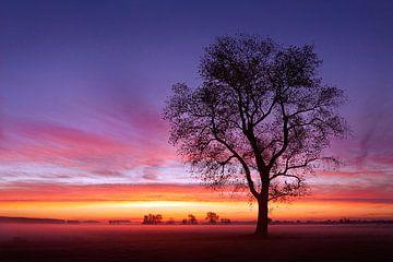 Guten Morgen von Halma Fotografie