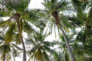 Grüne Palmen vor weißem Hintergrund von Bianca ter Riet