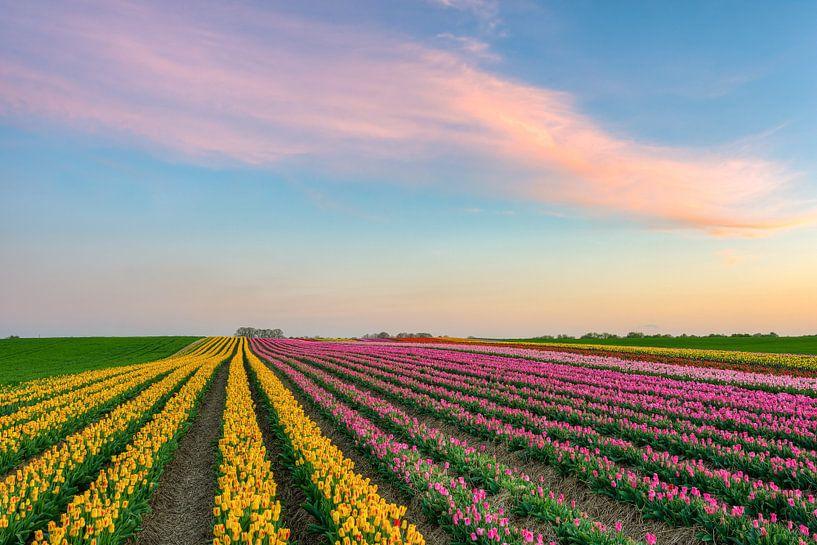 Tulpenveld aan de Nederrijn van Michael Valjak