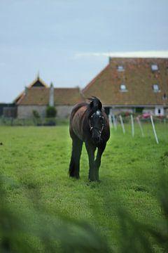 Paard in de wei van Annette van den Berg
