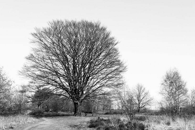 Kale boom in de winter van Emajeur Fotografie