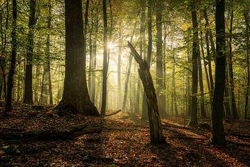 De afgeknapte boom van Joris Pannemans - Loris Photography