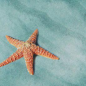 Starfish von Jacky Gerritsen