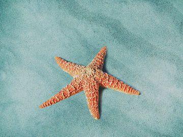 Starfish van