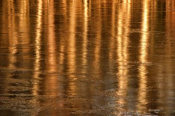 Golden forrest van Bob Bleeker