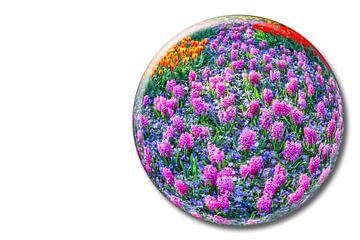 Glaskugel mit rosa Hyazinthen auf weißem Hintergrund in Keukenhof Niederlande von Ben Schonewille