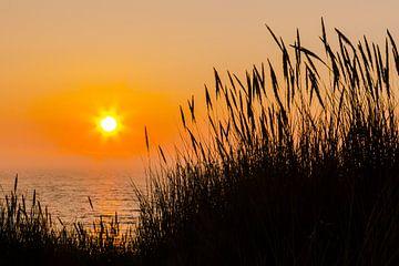 Duingras bij zonsondergang van Peter Leenen