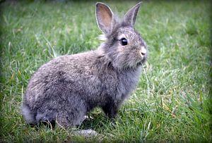 Snuf het konijn