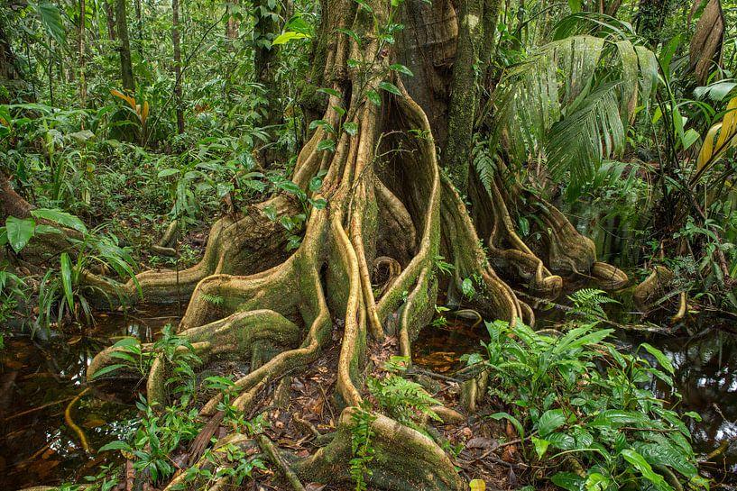 Jungle boom van Elles Rijsdijk