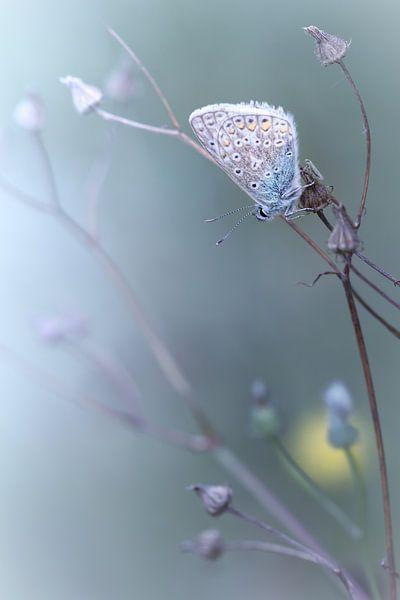 New Morning .... (Vlinder, Zomer, licht) van Bob Daalder