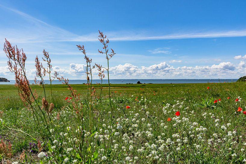 roter Klatschmohn und Wiesenblumen, Groß Zicker,  Rügen von GH Foto & Artdesign