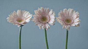 Roze Gerbera's | stilleven in pastel van Marianne Twijnstra-Gerrits