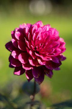 Blühende Blume von Alwin van Wijngaarden