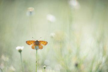 Vlinder op bloem van Kim Meijer