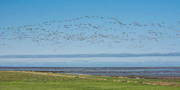 Ein Entenflug über die Küste in der Nähe der friesischen Stadt PaesensModdergat von Harrie Muis