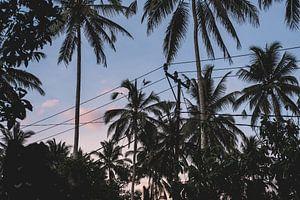 Palmbomen in Bali