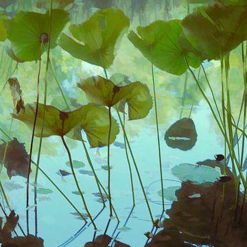 Fraîcheur lotus van Martine Affre Eisenlohr