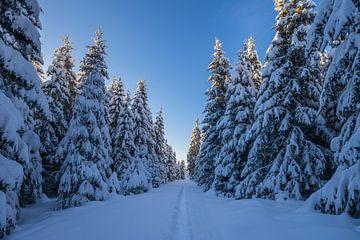 Weg im Nationalpark Harz von