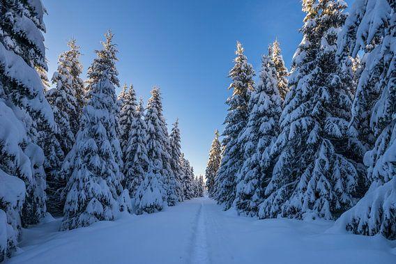 Manier in het Nationaal Park Harz van Patrice von Collani