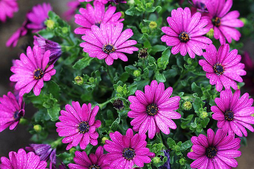 The Purple Flowers van Cornelis (Cees) Cornelissen