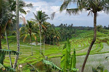 Bali rijstvelden van Giovanni della Primavera