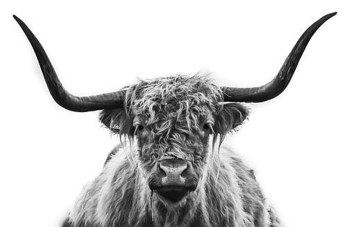 Zwart / wit portret Schotse Hooglander