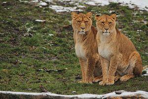 Leeuwin Twins