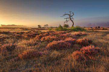 Bloeiende heide bij zonsopkomst van Frans Lemmens