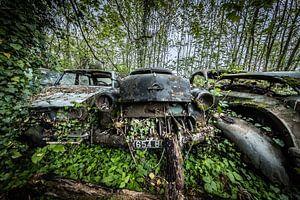Bos met oude auto's