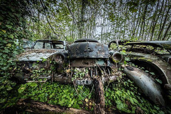Bos met oude auto's van Inge van den Brande