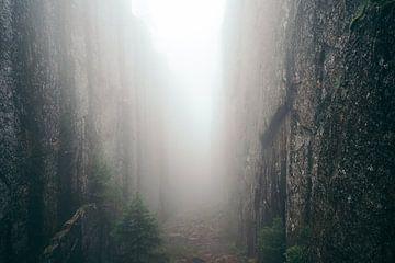 Mistige canyon van Floris Verweij